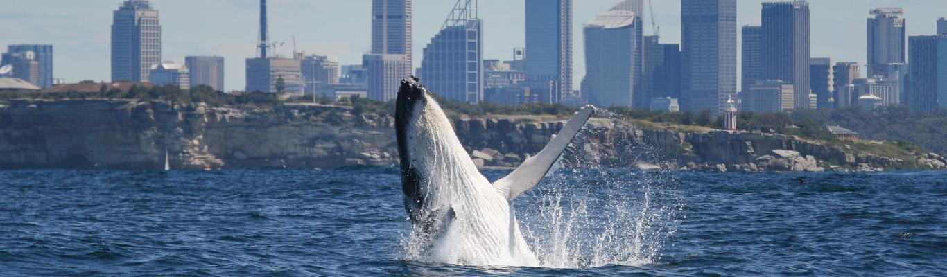 The Best Whale Watching Spots in Sydney